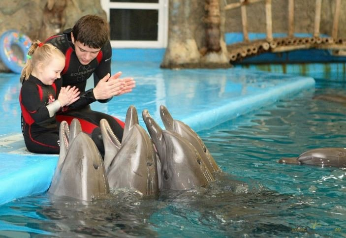 В Грозном планируют построить самый крупный дельфинарий на юге России