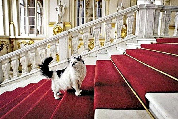 В Санкт-Петербурге отмечают «День эрмитажного кота»