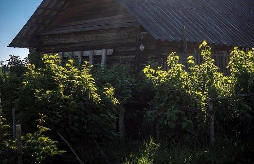 В деревне Москва Тверской области осталось всего 5 жителей